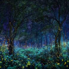 firefly.forest