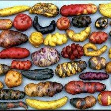 potatoes.of.peru