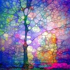 the.imagination.of.trees.by.tara.turner