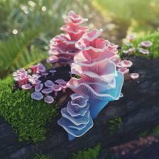 barbie.pagoda.fungus.by.hoodass