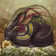 rabbit.artist.unknown