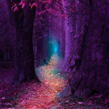 forest.artist.unknown