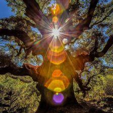 amber.sunshine