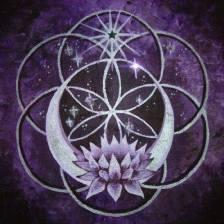divine.lotus