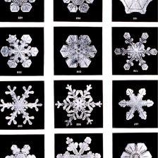 snowflakes.wilson.bentley