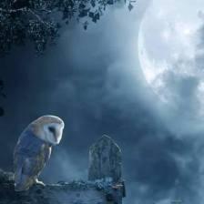 owl.moon